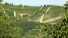 Rotweine aus dem Piemont