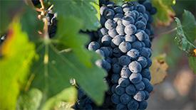 Junge & fruchtige Rotweine