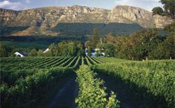 Weißweine aus Südafrika