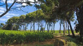 Rotweine aus dem Languedoc