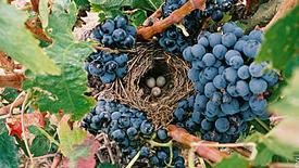 Trockener Rotwein aus aller Welt