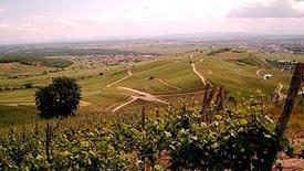 Weißwein aus dem Elsass